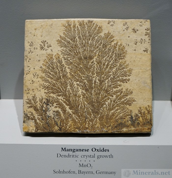 Manganese Oxide Dendritic Crystal Growths in Matrix from Solnhofen, Bayern, Germany