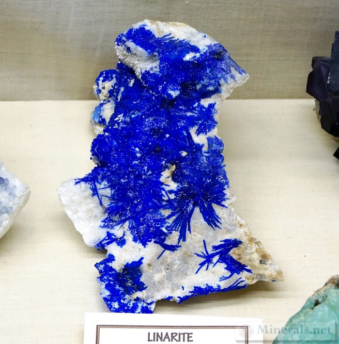 Electric Blue Linarite Sprays from the Blanchard Mine, Bingham, New Mexico