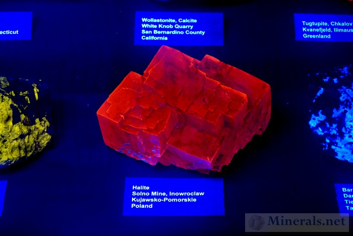 Fluorescent Halite from Inowroclaw, Poland: Richard Bostwick & Tema Hecht Collection