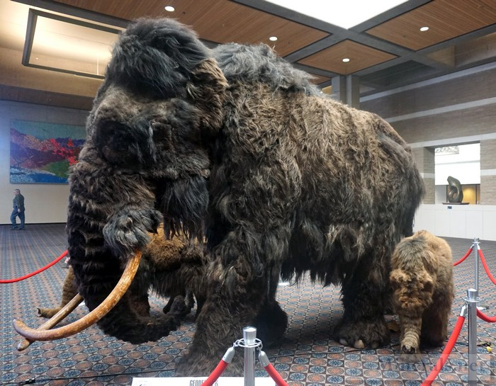 Woolly Mammoth Mother and Baby Replica in the Upstairs Show Hallway