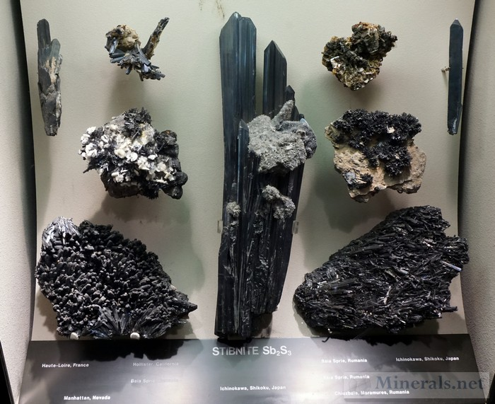 Display Case of Pyrite