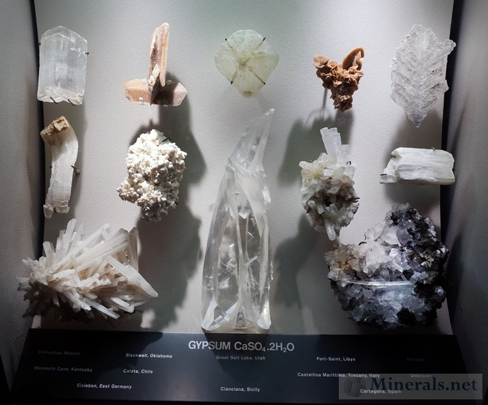 Display Case of Gypsum