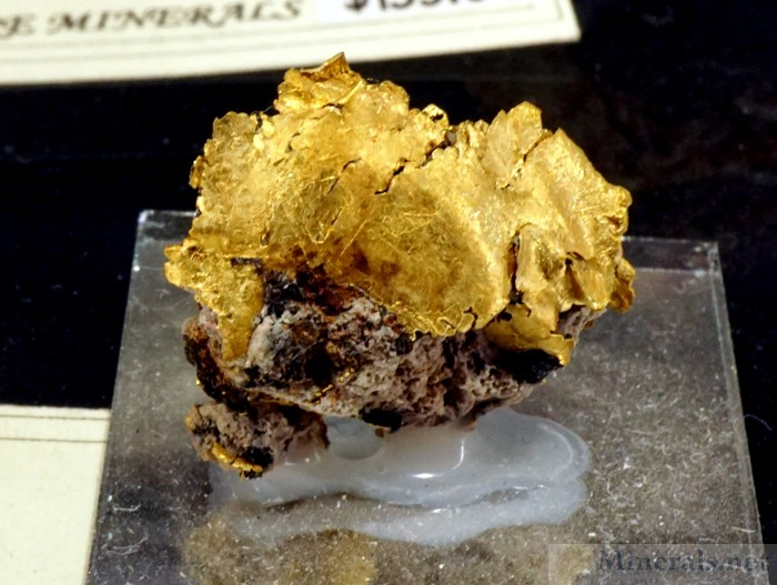 Recently Mined Gold Crystals from the Little Jonny Mine, Leadville, CO, Self-a-Ware Minerals