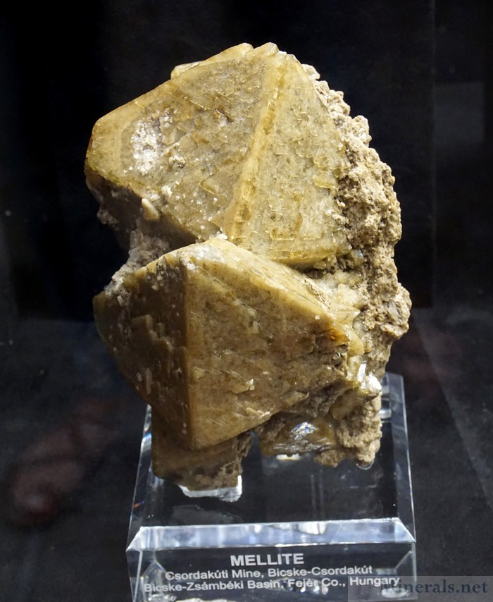 Mellite from the Csordakuti Mine, Bickske Csordakut, Hungary