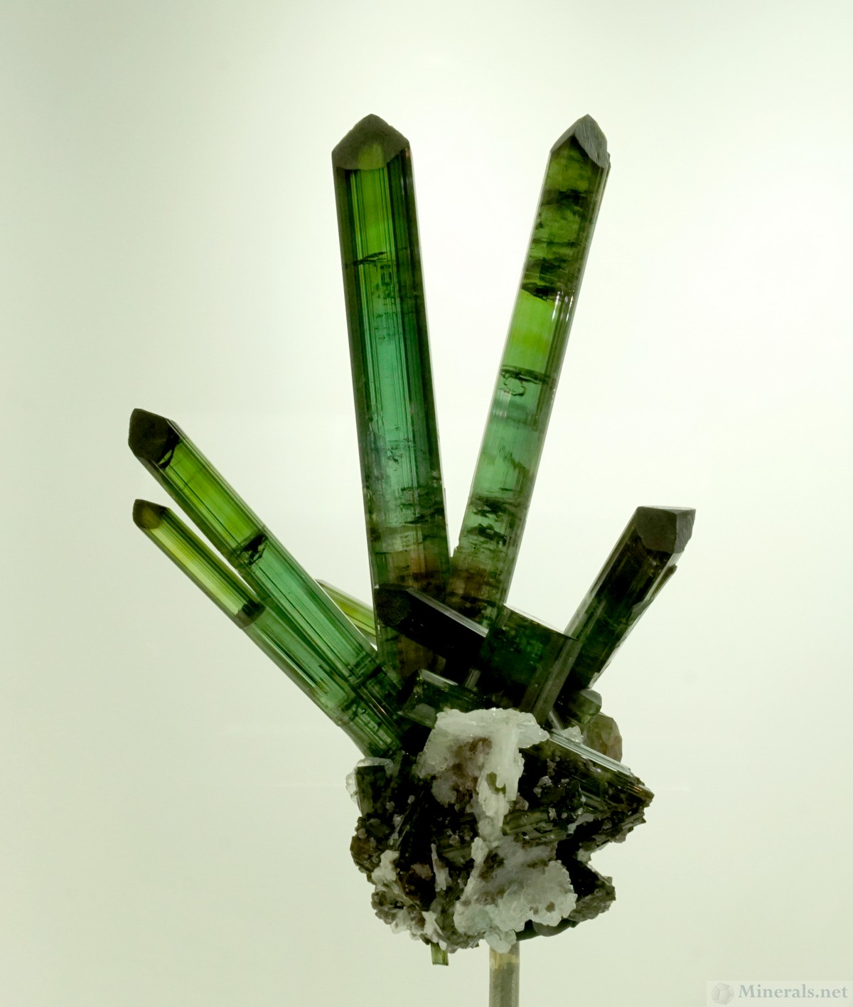 Another Exquisite Tourmaline Hand, most likely from Pederneira Mine, Minas Gerais, Brazil, Naturalcrationsmineralco.com
